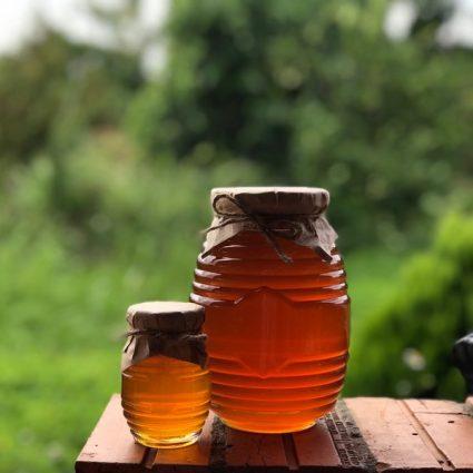 mật-ong-nuôi-từ hoa-cà-phê-có-tốt-không